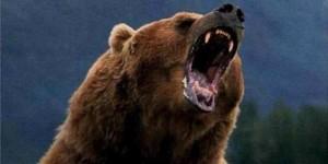 beruang cap panda